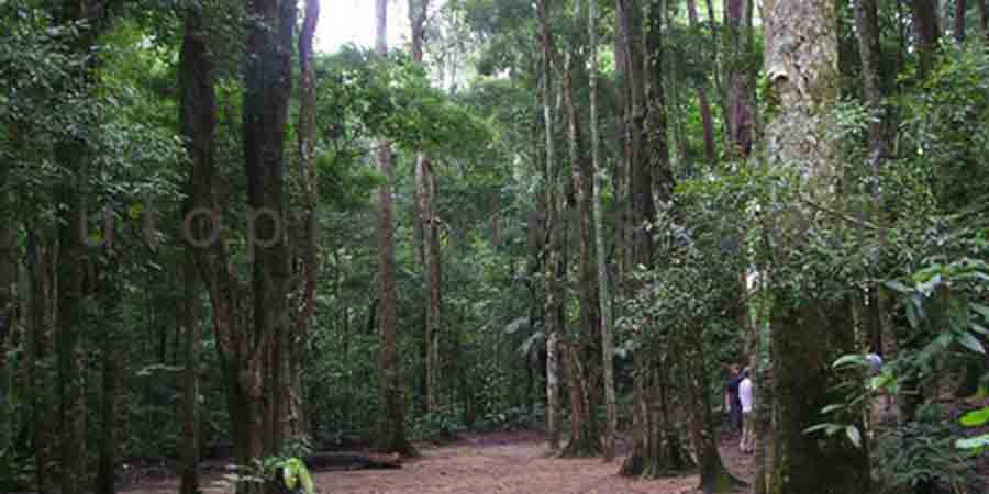 "Photo of ""Forest & Jungles"" type of location."